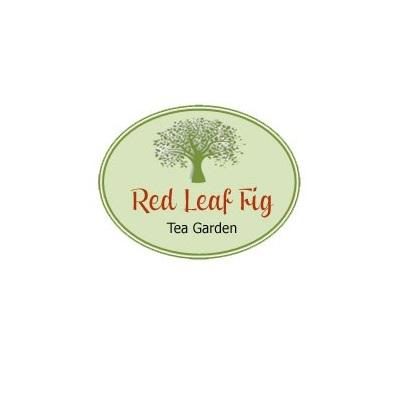 Red Leaf Fig Tea Garden